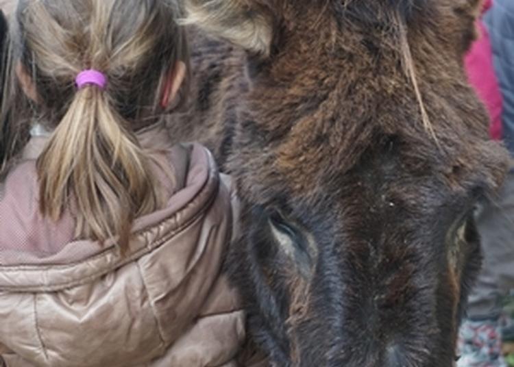 Ateliers Des ânes Et Des Enfants à Sache