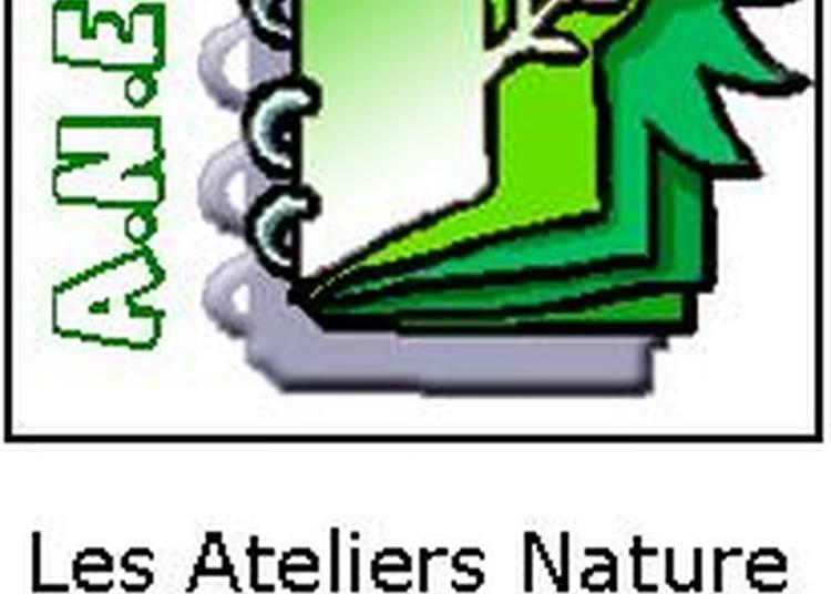 Ateliers Nature En Famille Anesm : Grandir Sur Les Bords De Marne à La Varenne saint Hilaire
