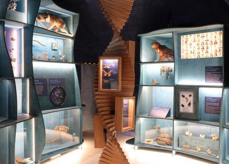 Au Muséum à Besancon