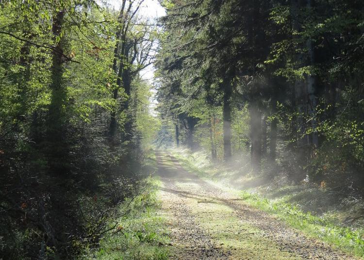Au Pas De L'âne, Contes Et Musique Dans Les Bois De La Comté à Salledes