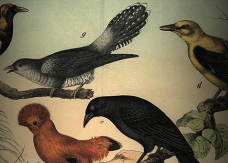 ...Et autres chants d'oiseaux à Saint Aupre
