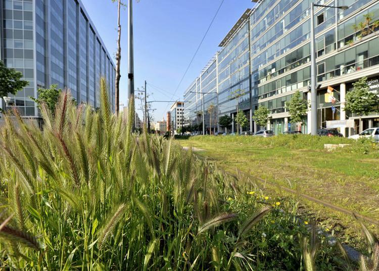 Balade à La Découverte Du Centre-ville Végétalisé à Marseille