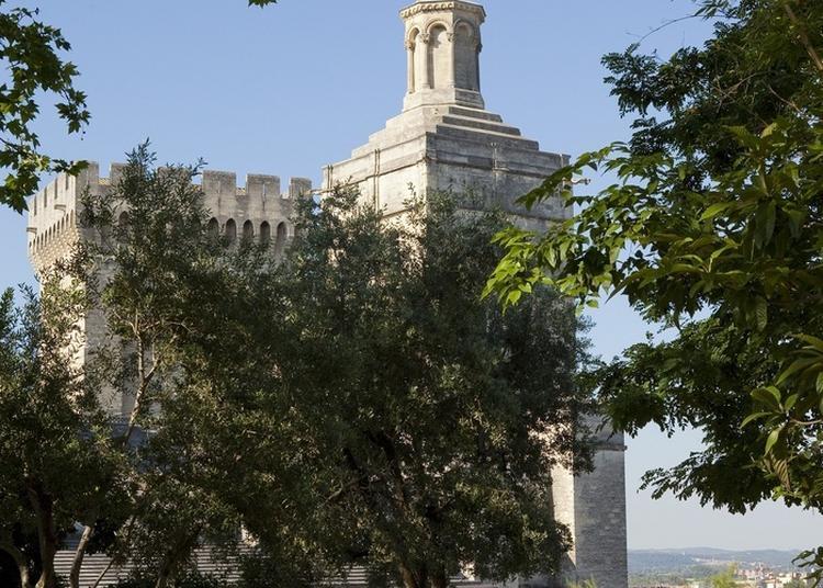 Balade Best Of Avignon - Spécial Nouveaux Arrivants - Par Avignon Tourisme