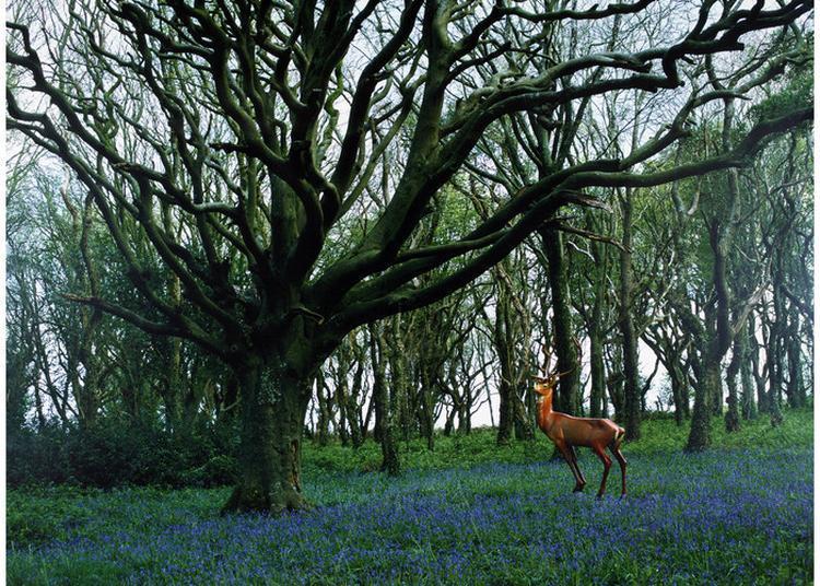 Balade Couplée Secrets D'arbres à Brest
