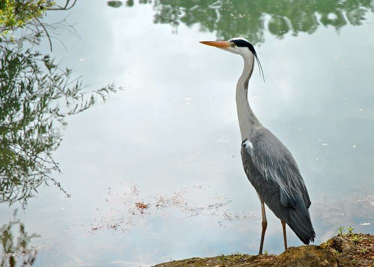 Balade Ornithologique à Plaisir