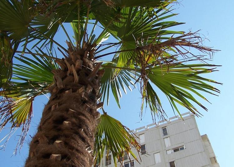 Balade Urbaine à Montpellier