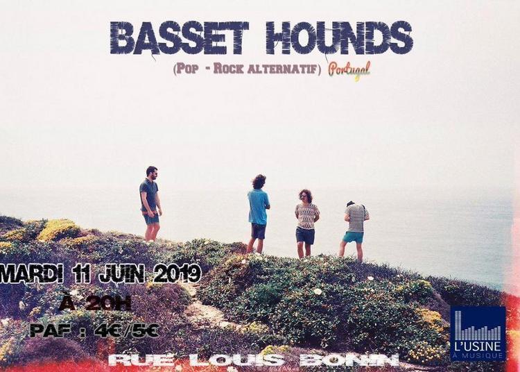 Basset Hounds à Toulouse