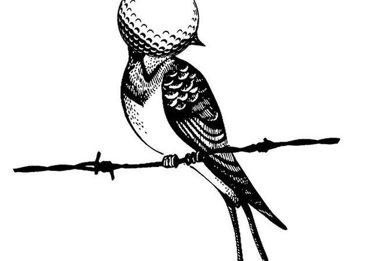 Birdie à Foix