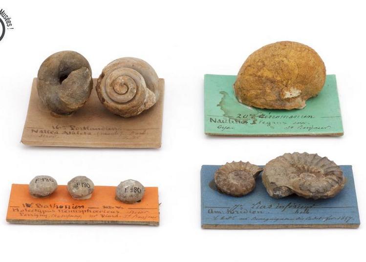 Bonjour les fossiles ! Présentation commentée à Lons le Saunier
