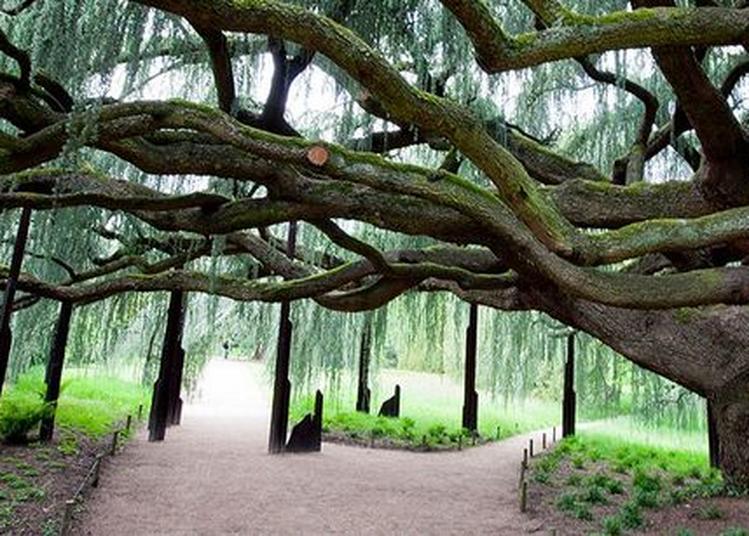 Café Botanique à La Serre Tropicale « Le Biomimétisme : S'inspirer De La Nature Pour Un Développement Durable » à Chatenay Malabry