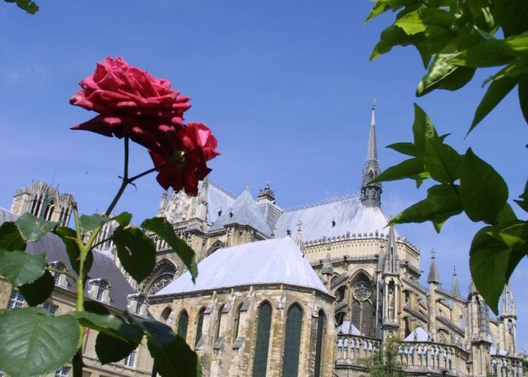 Cathédrale Notre-dame à Reims