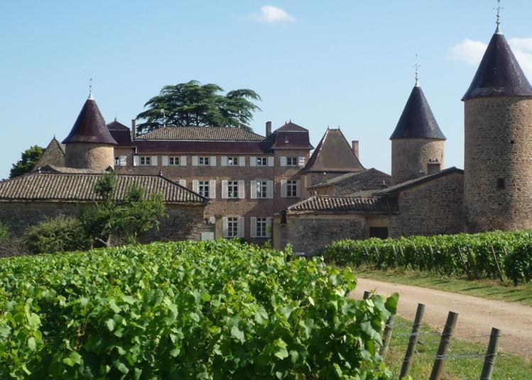 Château De Chasselas : Dégustation De Vins