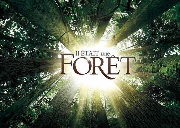 Cinéma En Plein Air : « Il était Une Forêt » De Luc Jacquet Avec Francis Hallé à Niort