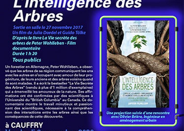 Cinéma - L'Intelligence des Arbres à Cauffry