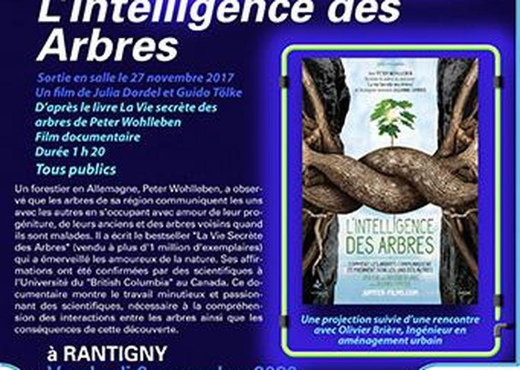Cinéma - L'Intelligence des Arbres à Rantigny