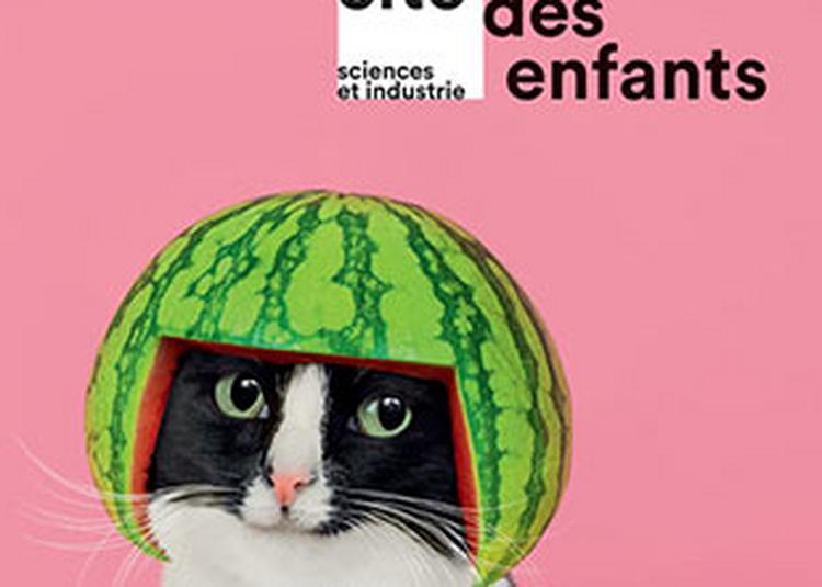 Cite Des Enfants 5-12 Ans à Paris 19ème
