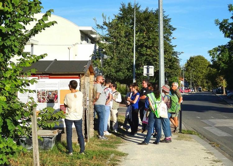 Claveau : Quand La Cité Se Réinvente à Bacalan à Bordeaux