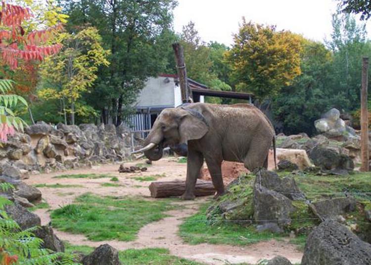 Cogition Animale : Peut-On Parler à La Chapelle d'Armentieres