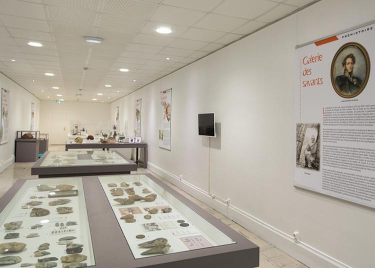 Collections Permanentes Du Musée Boucher-de-perthes à Abbeville