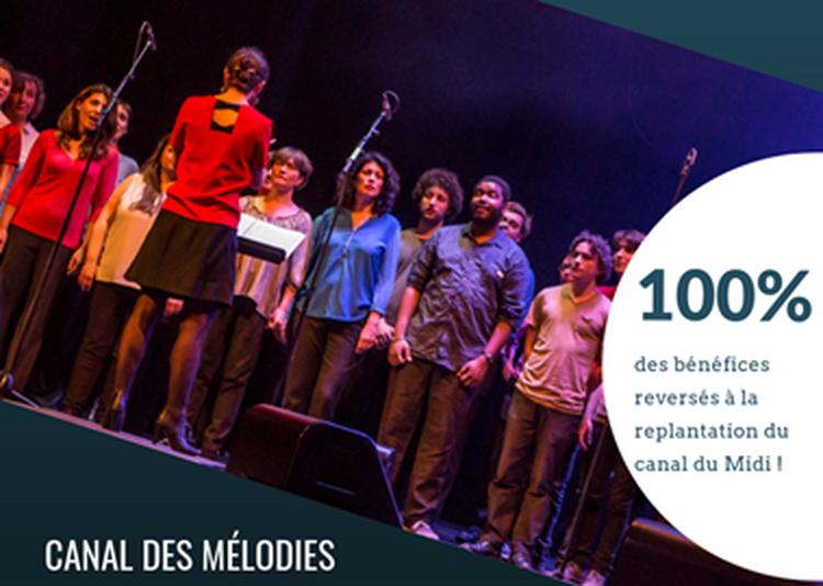 Concert pour le canal du Midi à Toulouse