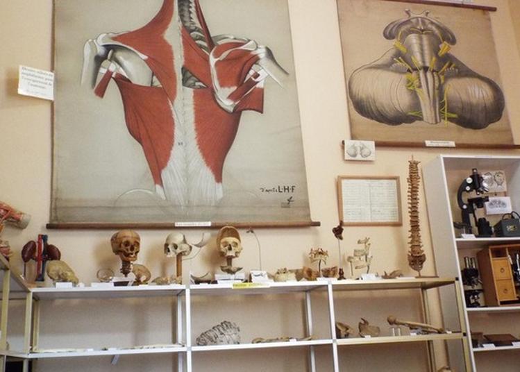 Conférence L'école De Chirurgie Construite À Paris Par L'architecte Jacques Gondouin À La Fin Du Règne De Louis Xv?. à Myennes