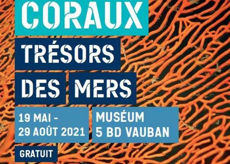 Coraux, Trésors Des Mers à Auxerre