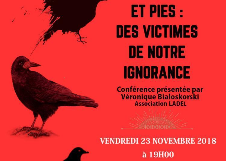 Corbeaux, Corneilles et Pies : des victimes de notre ignorance à Carpentras