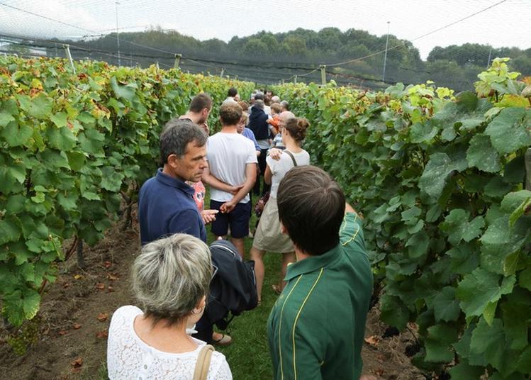 Coteau Du Braden : De La Vigne Au Vin à Quimper