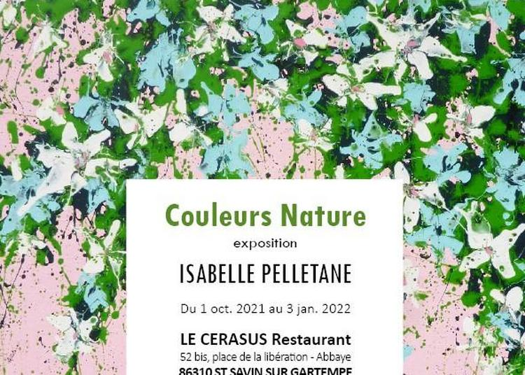 Couleurs Nature - Le Cerasus à Saint Savin
