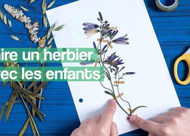 Création D'un Herbier En Famille à Nevers