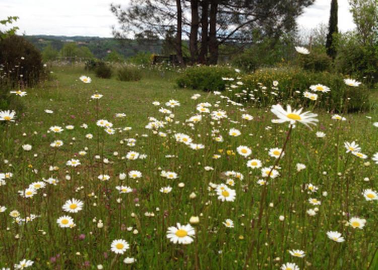 Découverte Commentée Des Jardins De Haute Terre à Saint Andre d'Allas