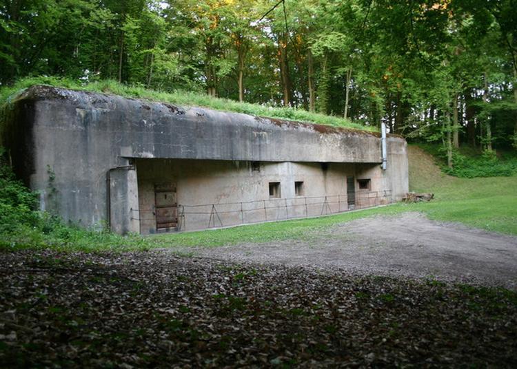 Découverte D'un Abri De Surface De La Ligne Maginot à Dalstein