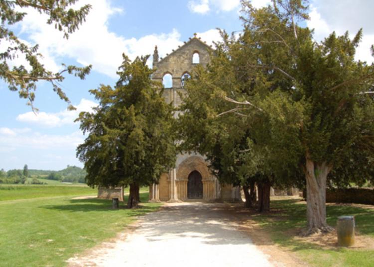 Découverte D'une Abbaye Fondée Au Viiie Siècle à Blasimon