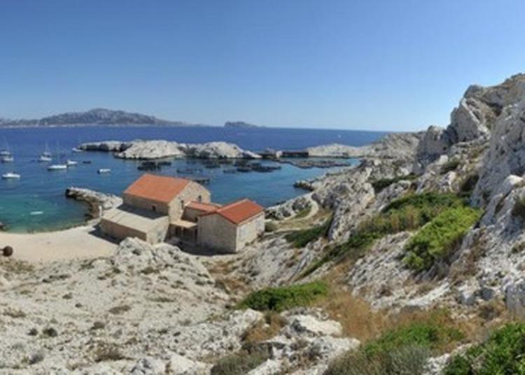 Découverte De L'archipel Du Frioul à Marseille