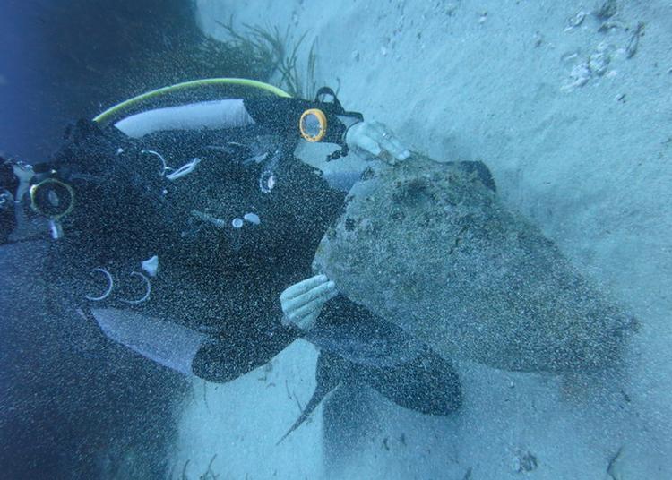 Découverte De L'art Sous L'eau (archéologie Sous Marine) à Baie Mahault