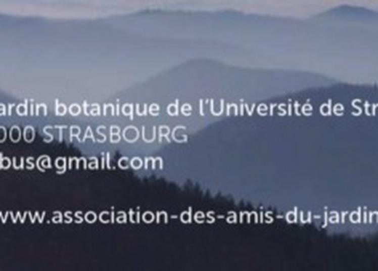 Découverte De L'association Des Amis Du Jardin Botanique à Strasbourg