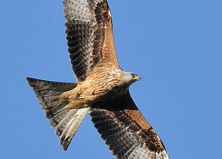 Découverte De La Migration Des Oiseaux à Chevrier