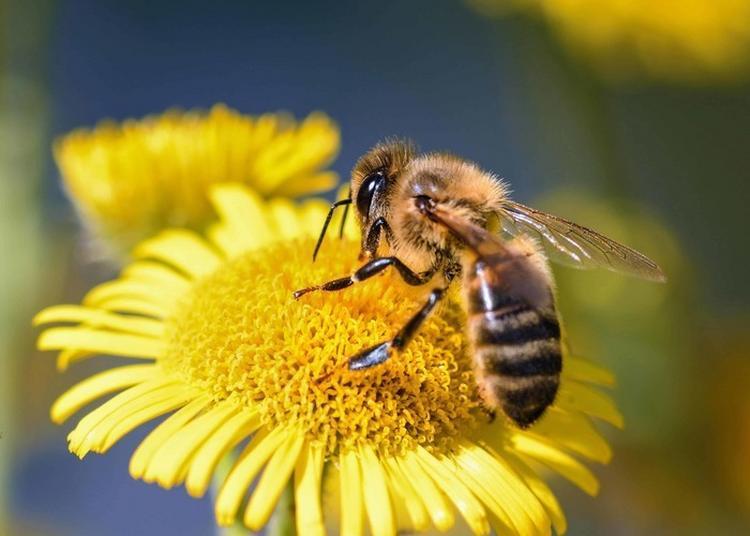 Découverte Des Insectes Pollinisateurs - Ateliers-conférences à Le Mans