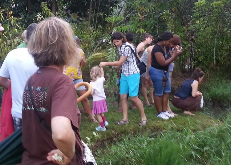 Découverte Des Plantes Et Fleurs De Guyane à Saint Laurent Du Maroni