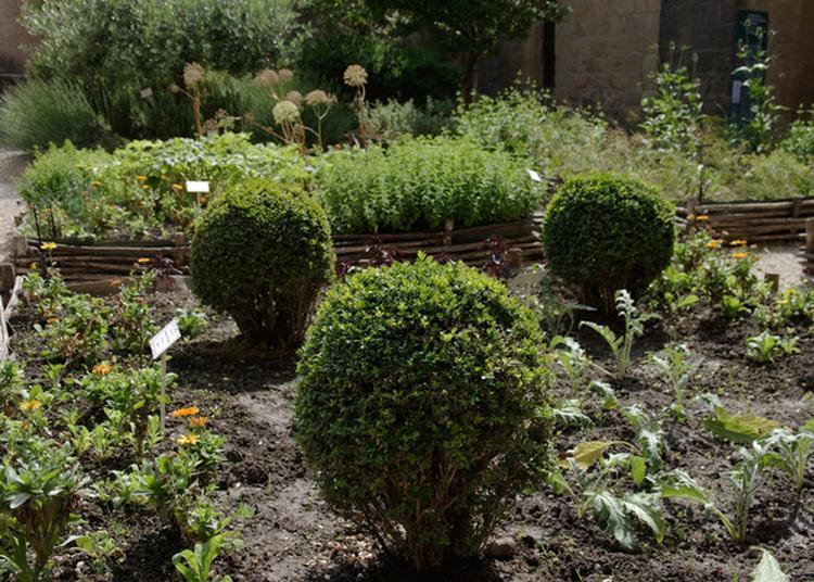 Découverte Du Jardin Des Simples à Salon de Provence