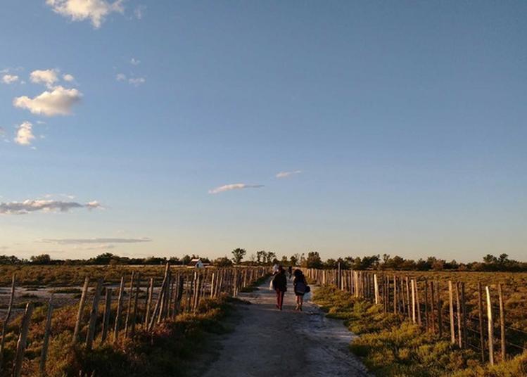 Découverte Du Sentier D'interprétation Du Mas Du Pont De Rousty à Arles
