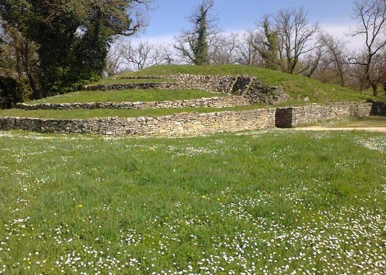 Découverte Du Site Archéologique à Bougon