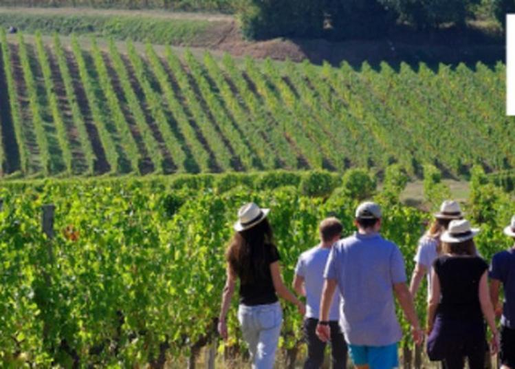 Découverte Guidée Du Vignoble Et De La Production Du Château à Rions