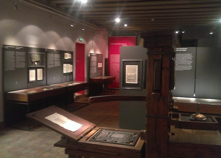 Découvertes De Nos Collections Permanentes à Lyon