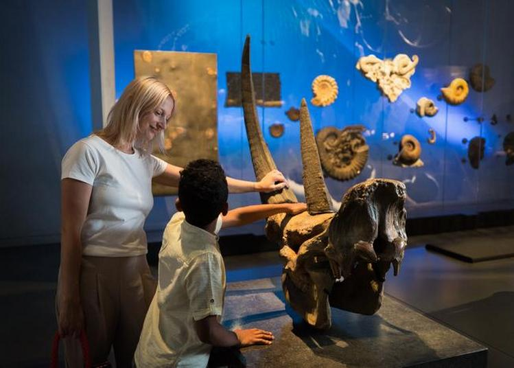 Découvrez Les Expositions Du Musée Des Confluences à Lyon