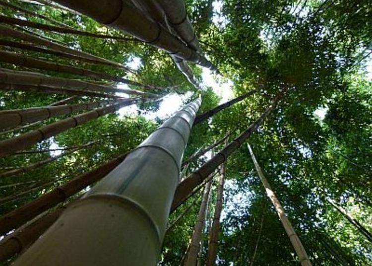 Découvrez Plus De 55 Variétés De Bambous Au Parc Botanique ! à Matha