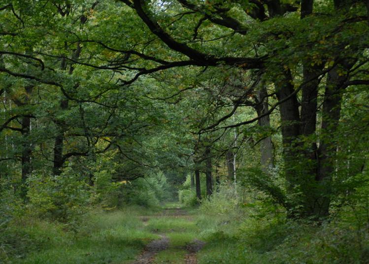 Découvrir La Gestion D'une Forêt à Sonchamp