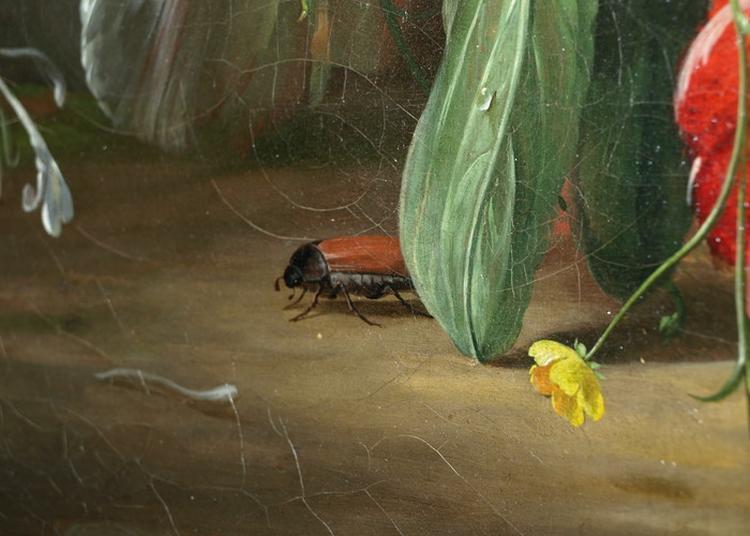Des Insectes Et Des Plantes, Visite Guidée Au Musée Des Papillons à Saint Quentin