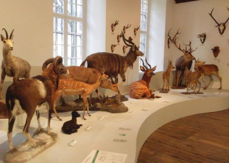 Espace Ludique Du Muséum D'histoire Naturelle à Troyes