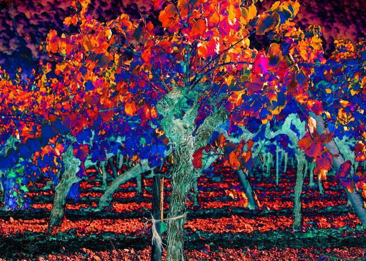 Et l'automne vin à Tavel